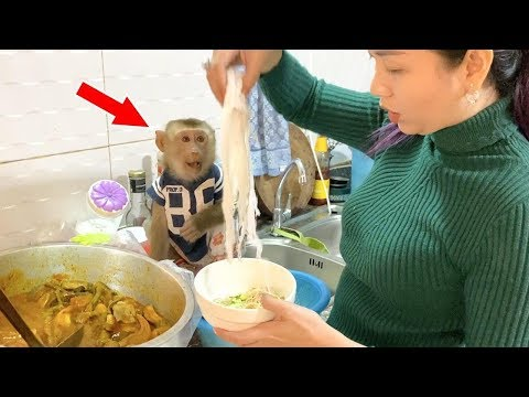 Baby Monkey DouDou And Mom Prepares The Vegetable For To Eat Asian Noodle