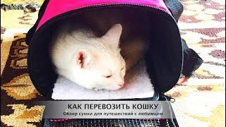 Как перевозить кошку Обзор сумки переноски