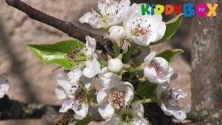 Vivaldi - VIER JAHRESZEITEN - Frühling / Spring