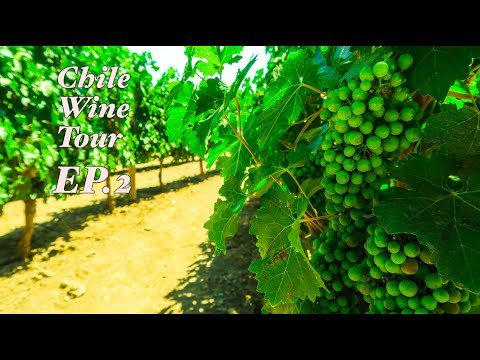 Chile EP. 2- Santiago, Chile - Fish, Vegetable, Flower Markets + Wine Tour (Concha Y Torro)