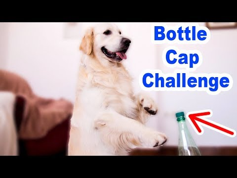 Funny Dog vs Bottle Cap Challenge Compilation
