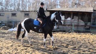 Тренировка по конкуру (Школа верховой езды