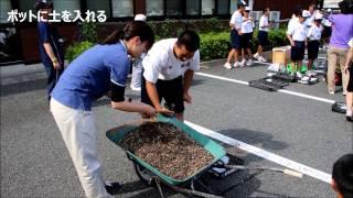 菊池北中学校で菊づくり体験(H26.5.23)