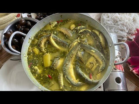 Về Thăm Lại Nhà Út Thư Và Món Cá Chạch Nấu Chuối | TQMT #132