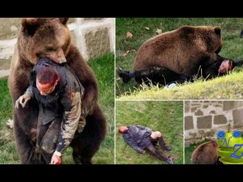Download Most Amazing Wild Animal Attacks #15 - Gorilla Fighting, Lion vs Buffalo - CRAZIEST Animal Fights