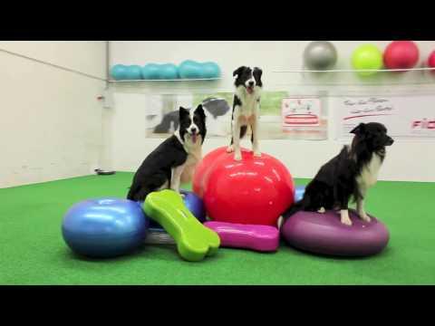 Hundeturnen - School of Dog by Lukas und Falco