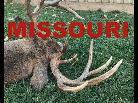 Missouri DIY Public Land Buck Bow Hunting The Rut