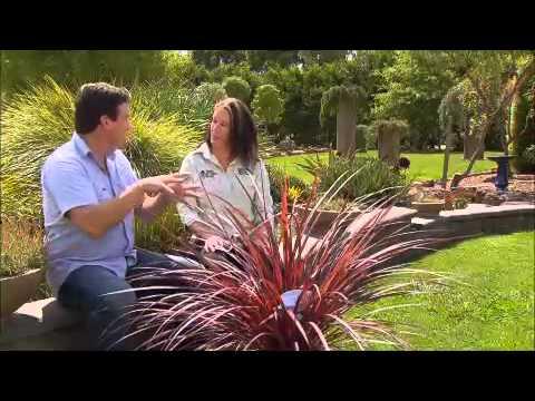 The Garden Gurus - New Release Plants: Cordyline Burgundy