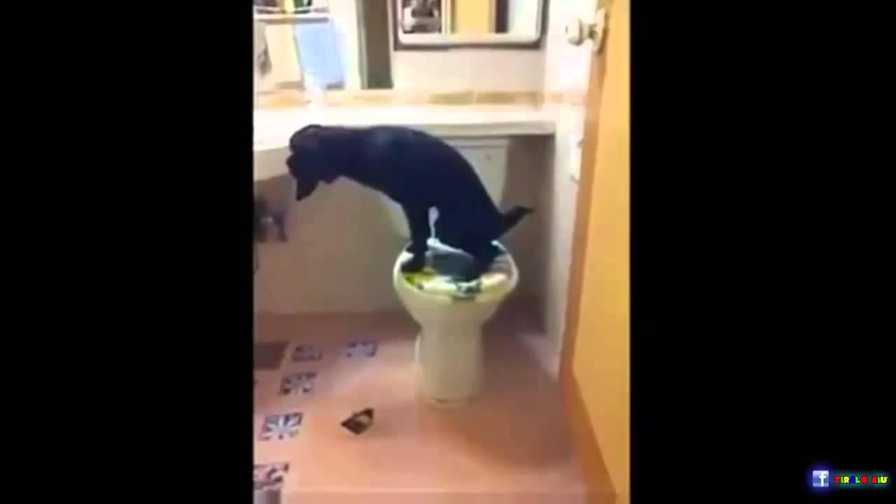 Cane fa pipi nel wc youtube - Cane pipi letto ...