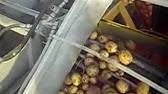 Кск-1 бережлив, в отличие от других картофелекопателей, не оставляет клубни на поле, а сам. Картофелекопалка тракторная цена: 52 111 руб / шт.
