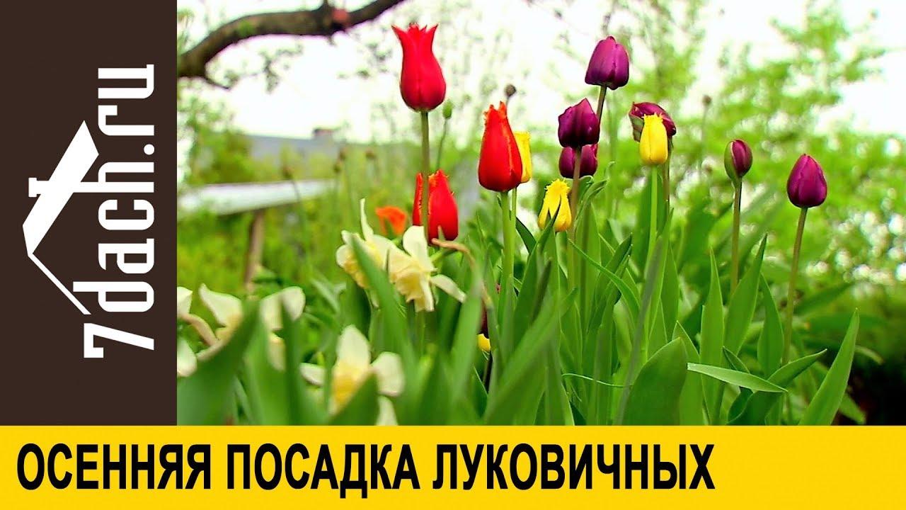 Фото цветов осенней посадки