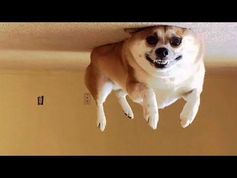 ? Awesome Funny ? Dogs And Cats ? -  Funniest And Cute Pet Videos