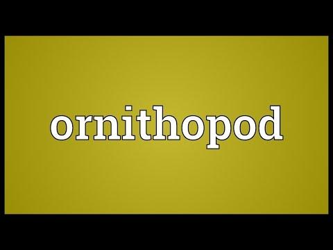 Ornithopod Meaning