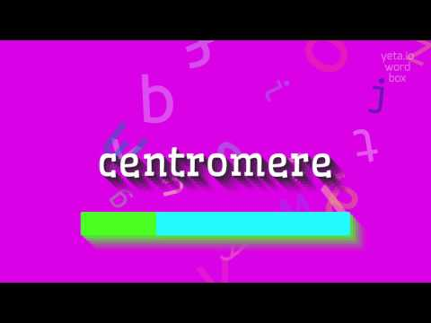 "How to say ""centromere""! (High Quality Voices)"