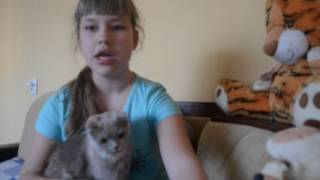 Вся правда о кошках ! Содержание кошек !