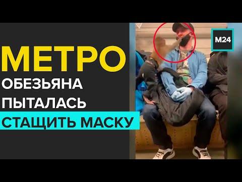 Обезьяна пыталась стащить маску у пассажира метро - Москва 24