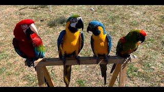Loros y las 5 libertades del bienestar animal