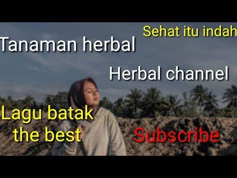 Romantic song batak -indonesia
