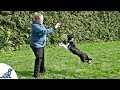 Teach Your Puppy To Fetch And LOVE To Bring The Toy Back - Professional Dog Training Tips