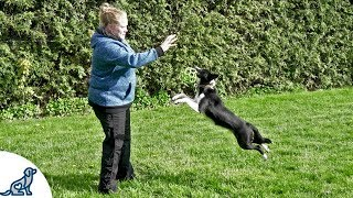 Teach Your Puppy To Fetch And LOVE To Bring The Toy Back  Professional Dog Training Tips