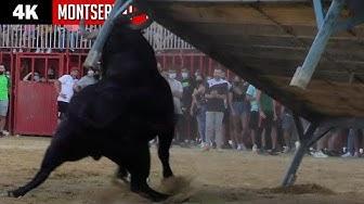 Imagen del video: Concurso de vacas bravas y toro de regalo en Montserrat