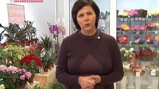 Поздравление с Днем рождения г. Новочебоксарск Вероники Беликовой Цветы Торг