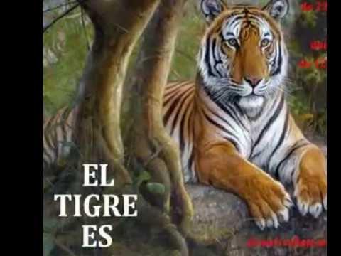 DANIEL CALLEJO.......EL TIGRE - YouTube