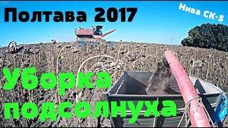 Уборка подсолнуха 2017/Полтавская обл./ Нива-СК-5