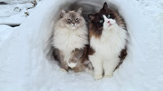 Cats Playing In The Snow (Cute Paw Prints)