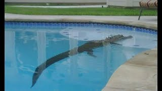 Video 8 Bizarre Things People Found in Their Pool download MP3, 3GP, MP4, WEBM, AVI, FLV Februari 2018