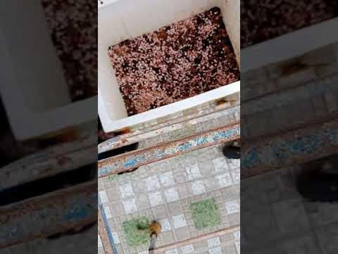 TepcanhVN – Hưỡng dẫn làm bể nuôi cá, trồng cây ngoài trời bằng thùng xốp