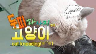 [까까캔디] 고양이 꾹꾹이란 이런것  고양이#꾹꾹이 하는 이유 #골골송  #꾹꾹이 하는고양이