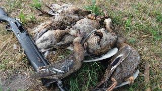 Супер ОХОТА НА УТКУ в жару с подхода Duck Hunting 2018