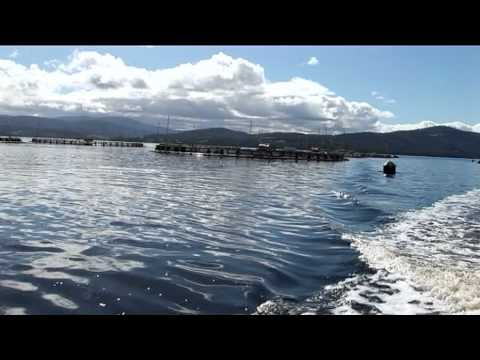 The Huon Aquaculture Story