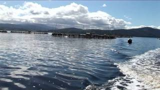 The Huon Aquaculture Story
