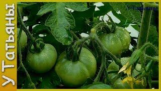 БОРНАЯ КИСЛОТА увеличивает урожайность: томатов, земляники, картофеля, свеклы и других растений.