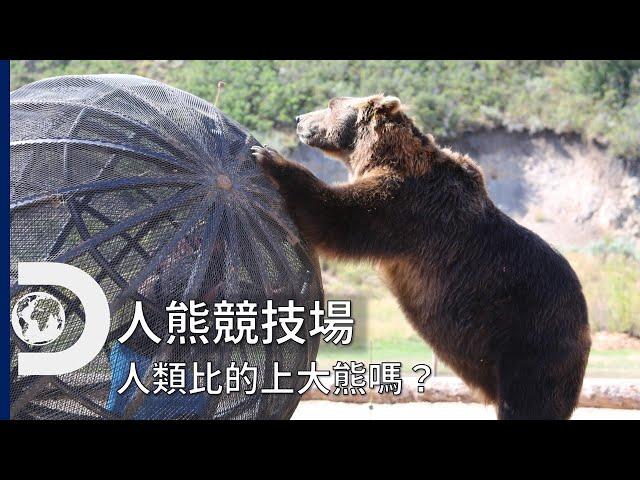 直接與世界頂尖掠食者的較量!人類 VS 大熊~力氣、敏捷..誰會勝出:《人熊競技場》