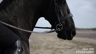 Красивый клип про лошадей. Работа с фризами. Фризские лошади.