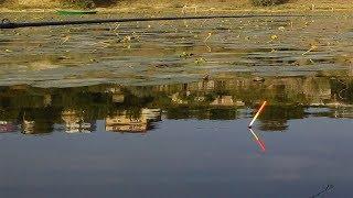 Ловля Карася На Фидер И Поплавочные Удочки    Рыбалка На Пруду