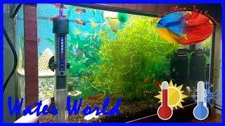 Water World #53 / Повышаем градус в аквариуме / Установка обогревателя и термометра