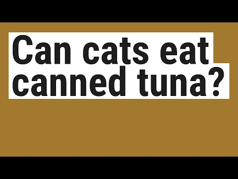Can Cats Eat Canned Tuna?