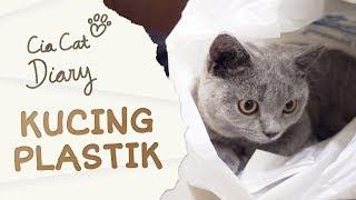 Kucing Bermain Plastik Kresek - Cia Cat Diary - Ep 4