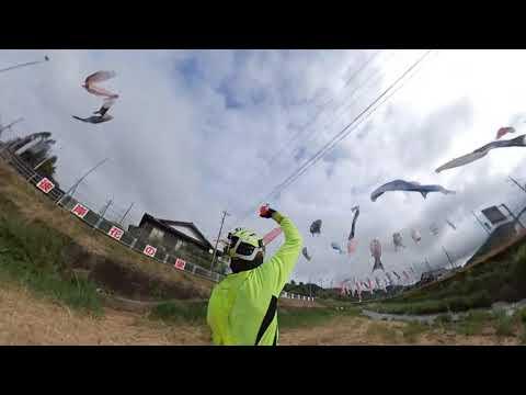 KoiNobori Carp Kites
