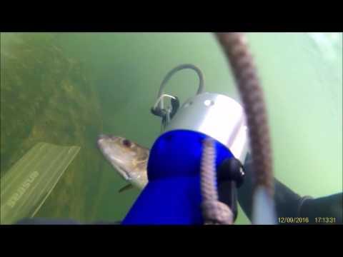 pesca sub agua doce pesca de toca...