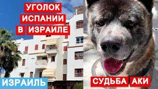 Пуэбло Эспаньол Не типичный для Израиля район История собаки с трагичной судьбой породы Акита ину