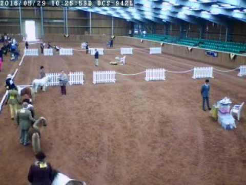 Mini Horse Sales