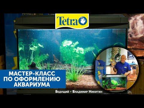 Мастер-класс с TETRA по запуску аквариума.
