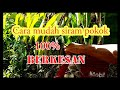 - Cara Siram Pokok Durian