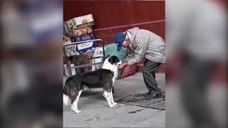 Дедушка напоил собаку водой и заставил Сеть плакать