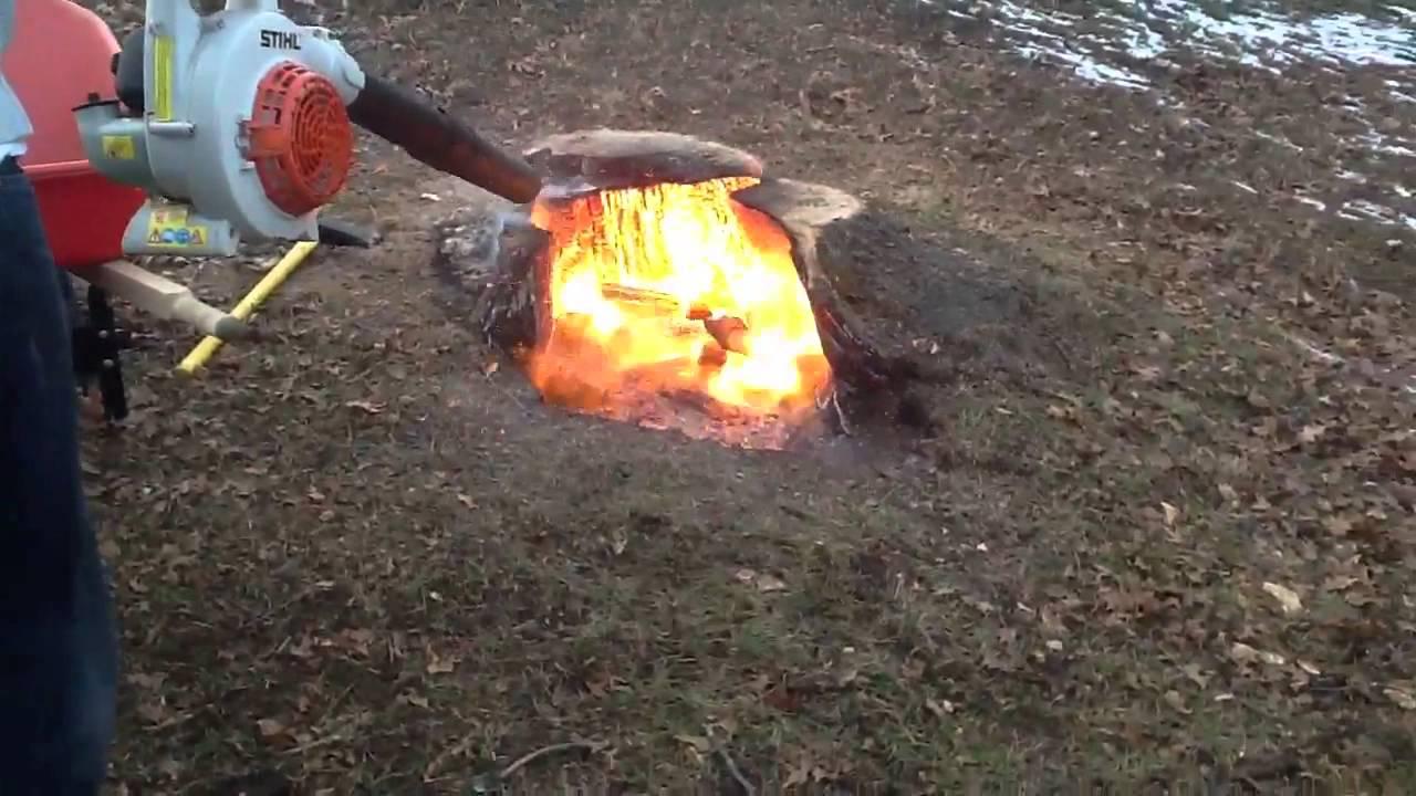 How to Burn Tree Stumps